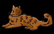 Том (домашний кот)
