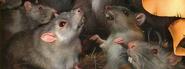 Крысы Обещание Метеора обложка