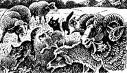 Овцы Полночь