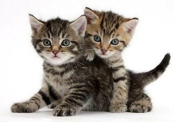 Котёнок | Коты-воители вики | Fandom