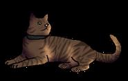 Мокко (домашний кот)