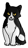 Быстролап (котёнок)