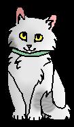 Тейлор (котёнок)