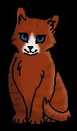 Белоносая (котёнок)