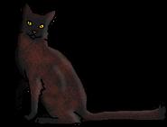Шишка (звёздный предок)