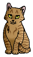 Ветряная Звезда (котёнок)