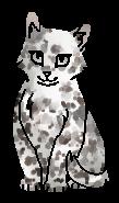 Ольха (котёнок)