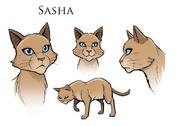 Саша концепт