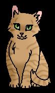 Камышинка (котёнок)