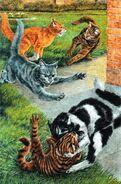 Схватка лесных котов с домашними забияками, Звездный свет золото