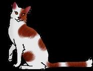 Вишнелапка (звёздный предок)