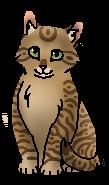 Ветерок (котёнок) ГП