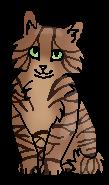 Можжевельник (котёнок)