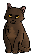 Чернохват (котёнок)
