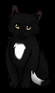 Горелый (котёнок)