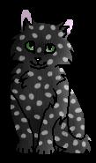 Капелька котенок