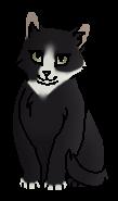 Мгла котёнок