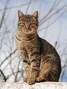 220px-Cat November 2010-1a (1)