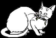 Medicine Cat.sh