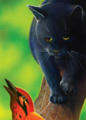 Crowfeather.FG-6.png