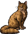Spotted Fur.warrior
