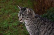 Cat-1118458 640