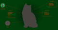 Hollyleaf.Website