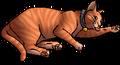 Filou.kittypet
