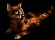 Lynxkit