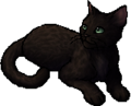Leopardfoot.star