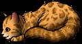 Leopardstar.kit