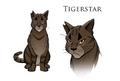 Tigerstar.concept