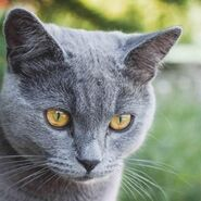 Nomi per gatti grigi 97 600 square
