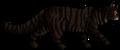Tigerstar (AVoS).loner