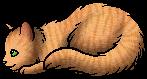 Beech Tail