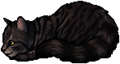 Owlnose.kit