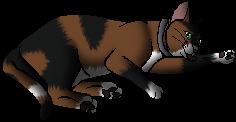 Kittypet