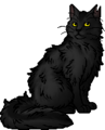 Graystripe.warrior