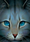 Jayfeather.FG-6.png