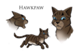 Hawkfrost.concept