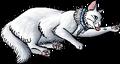 Buster.kittypet