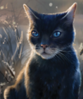 Crowfeather.SE-11-FC.png