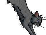 Cobweb (cat)