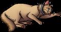 Daisy (TC).kittypet