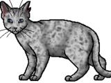 Ashfur (TC)