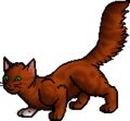 Squirrelflight.apprentice