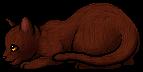 Acorn Fur.kit