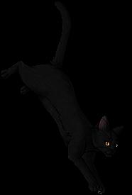Marigold (cat)