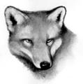 Fox.FG-1