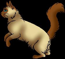 Yew Tail